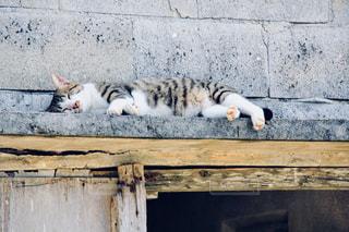 木製のベンチに横になっている猫の写真・画像素材[924581]