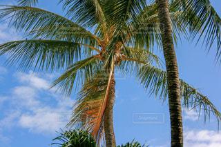 ヤシの木とビーチの写真・画像素材[1029925]