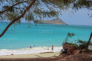 水の体の近くのビーチでヤシの木のグループの写真・画像素材[1029974]
