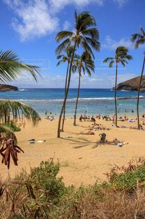 ハワイのビーチの写真・画像素材[1030017]