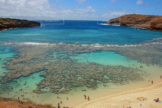 ハワイの珊瑚礁の写真・画像素材[1030019]