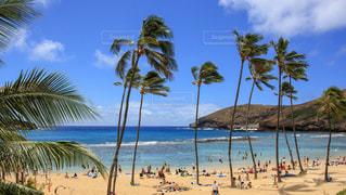 ハワイのビーチの写真・画像素材[1030020]