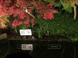 なばなの里の鏡池の写真・画像素材[905842]