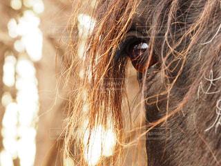 馬の瞳の写真・画像素材[906390]