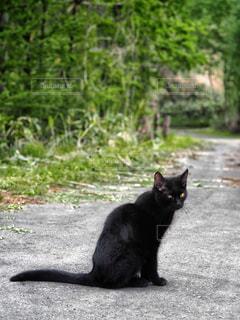 黒猫の写真・画像素材[906409]