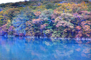 木々 に囲まれた水のの写真・画像素材[906432]
