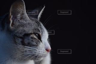 視線の写真・画像素材[906438]