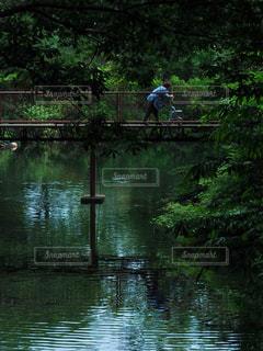 池の写真・画像素材[906479]