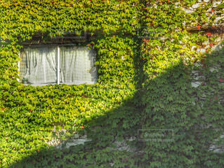 緑の葉と黄色の写真・画像素材[906809]