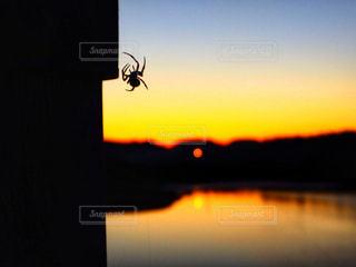 沈む夕陽、上る蜘蛛の写真・画像素材[907810]