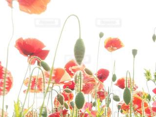 近くの花のアップの写真・画像素材[907815]