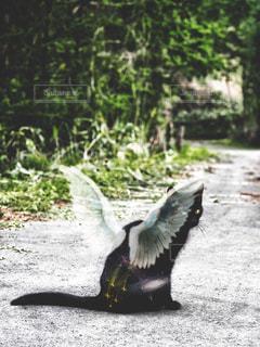 羽の生えた猫の写真・画像素材[909639]