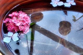 紫陽花の写真・画像素材[911238]