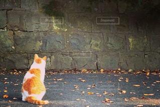 猫の哀愁の写真・画像素材[911240]