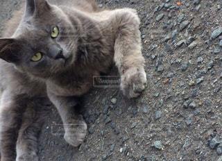 地面に横になっている猫の写真・画像素材[913870]