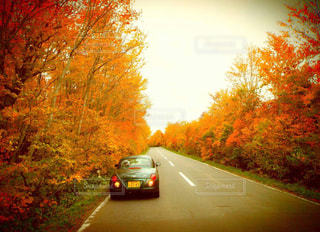 道を行の写真・画像素材[913873]
