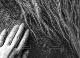 馬の毛並の写真・画像素材[913874]