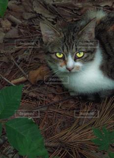 地面に横になっている猫の写真・画像素材[913876]