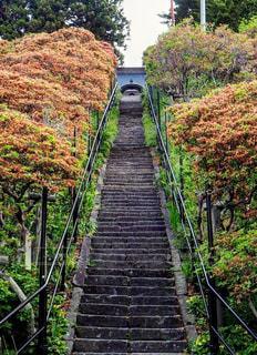 階段の写真・画像素材[913882]