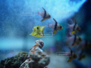 魚のぼやけた画像の写真・画像素材[919829]