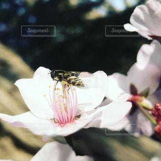 近くの花のアップの写真・画像素材[906505]