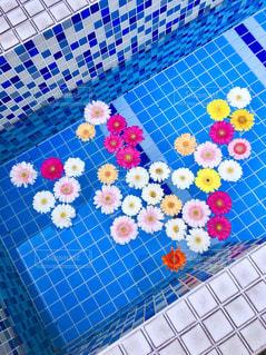 お花の写真・画像素材[2266524]