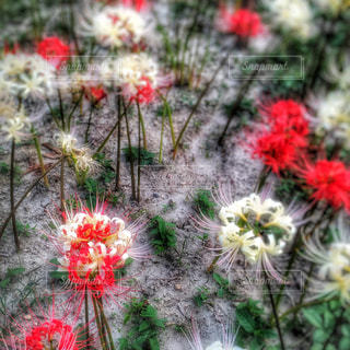 植物にピンクの花 - No.907996