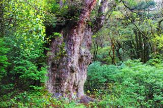 緑豊かな森の真ん中の木の写真・画像素材[908011]