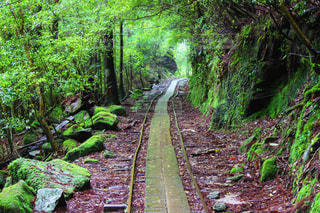 緑豊かな緑の森のトロッコ道の写真・画像素材[908014]