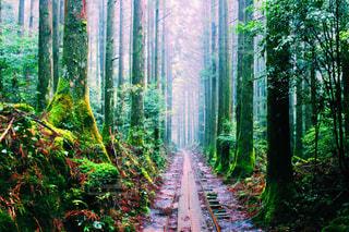フォレスト内のツリーの写真・画像素材[908015]