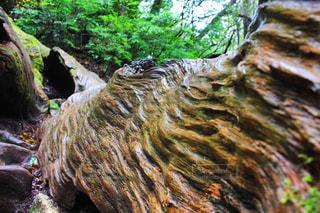 近くの木の横にある岩を - No.908016