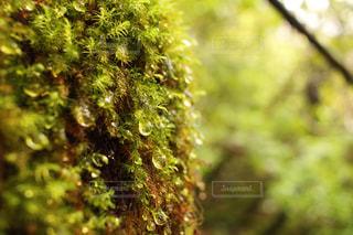 近くの森の写真・画像素材[908017]