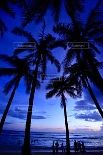 水の体の前でヤシの木とビーチの写真・画像素材[908045]