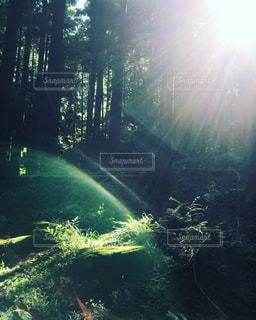 森の光の写真・画像素材[907515]