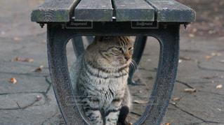 ベンチ下の猫 - No.907636