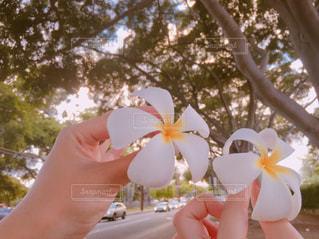 花を持っている人の写真・画像素材[1268431]
