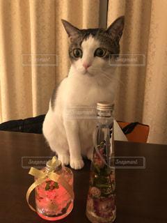テーブルの上に座って猫の写真・画像素材[1408294]