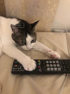 リモート コントロールの上に座っている猫の写真・画像素材[1451455]