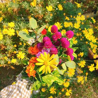 黄色い花の上に座って花の花瓶の写真・画像素材[1597467]