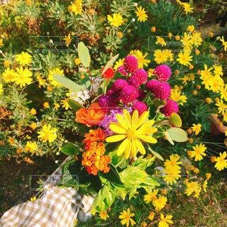 黄色い花の上に座って花の花瓶の写真・画像素材[1597468]
