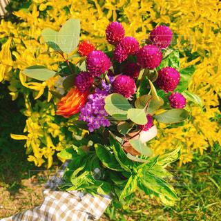 近くの花のアップの写真・画像素材[1597472]
