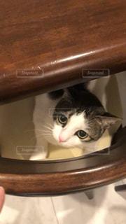 猫の写真・画像素材[1637673]