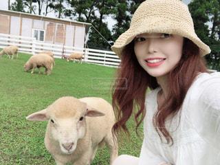 芝生で覆われた畑の上に立つ羊の群れの写真・画像素材[3570935]
