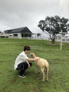 羊と戯れる男性の写真・画像素材[3587594]