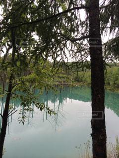 水の体の横にあるツリーの写真・画像素材[907988]