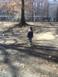 未舗装の道路を歩く男の子とガチョウの写真・画像素材[910865]