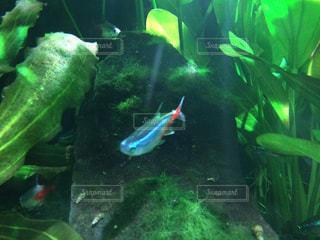 緑の水中の魚の写真・画像素材[937884]
