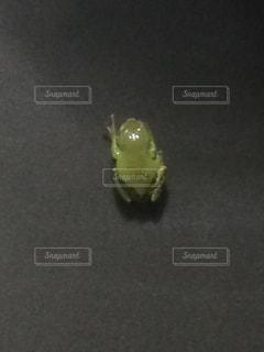 黄緑色のカエル - No.938317