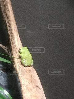 緑のカエル - No.938318