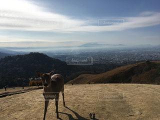 鹿と一緒に若草山の写真・画像素材[908293]